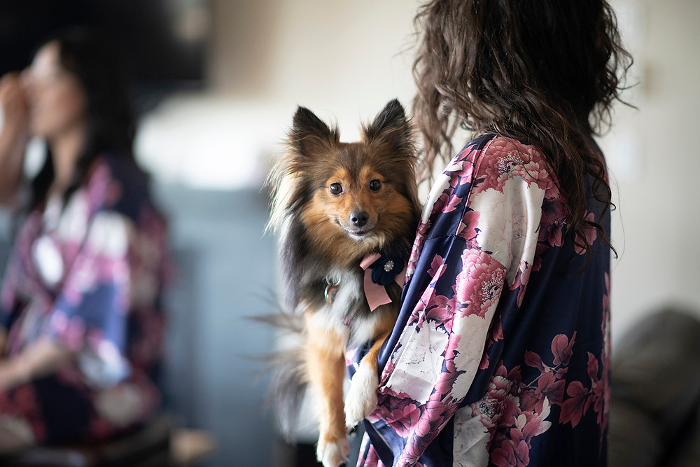 Furry wedding guest at a Ucluelet wedding at Black Rock Resort. Photographed by Ucluelet Photographer Kaitlyn Shea.