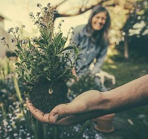Gardening, planting.jpg