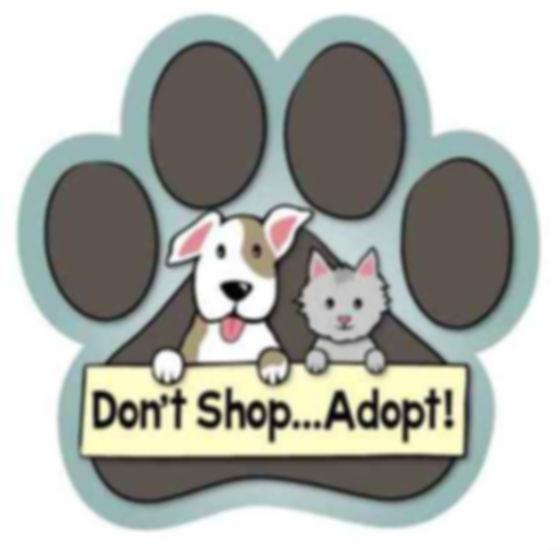 adopt-dont-shop1.jpg