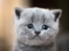 sad-cat-eyes.jpg