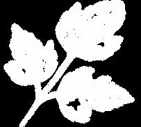 MP_Leaf_White.png