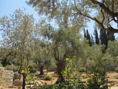 Gethsemane Jerusalem Israel