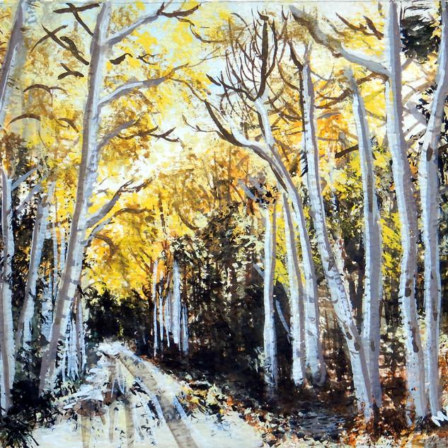 The Birch Path