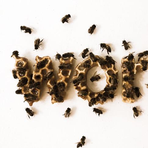 honey-3.jpg
