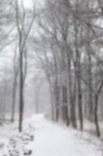 tree snow scene.jpg