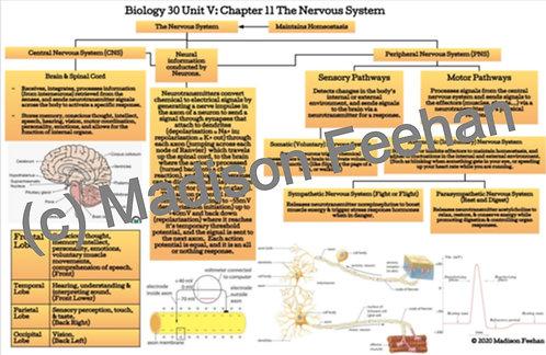 Biology 30 Chapter 11 Charts