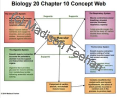 Biology 20 Chapter 10 Charts