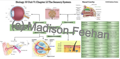 Biology 30 Chapter 12 Charts