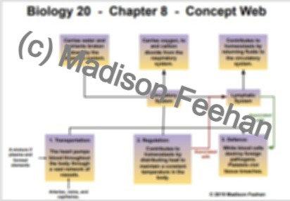 Biology 20 Chapter 8 Charts