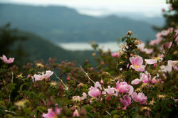 Flowers Blooming on Mt. Constitution