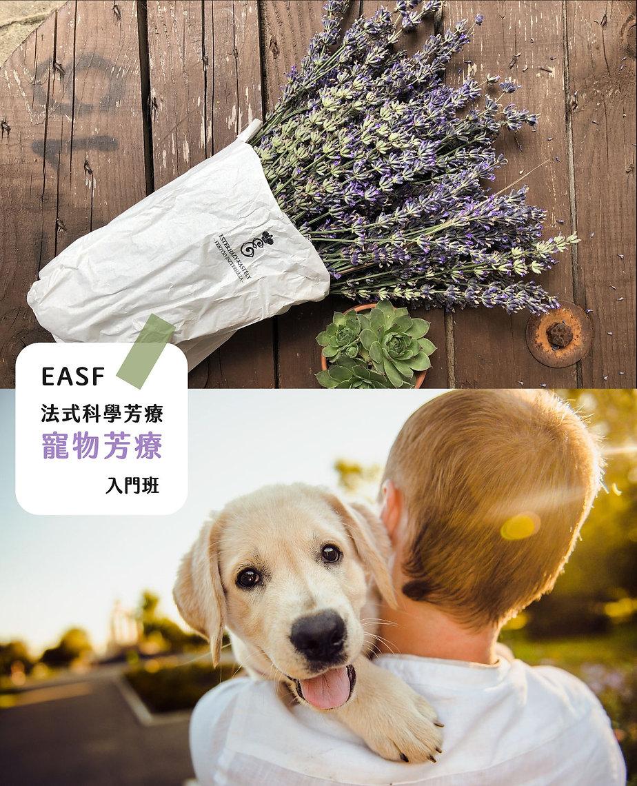 寵物芳療入門招生照片.jpg