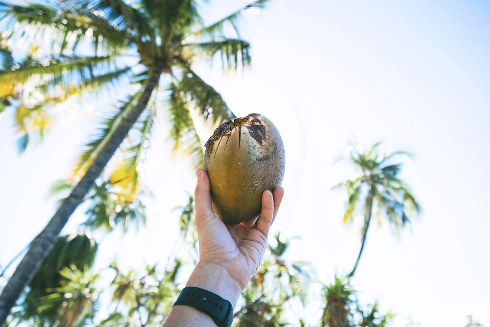 裴濟島椰子油