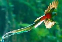Quetzal ve Avakado