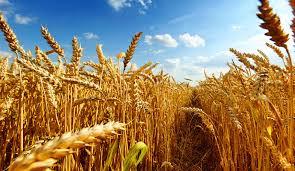 Tarımsal üretimde batıyor muyuz?