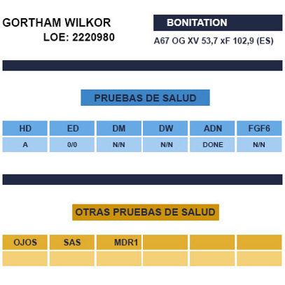 SEMENTAL-GHORTHAM-WILKOR.jpg