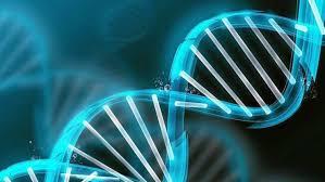 Genética, donde los problemas comienzan