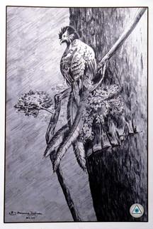 Arts de Raghav_Prasanna Raghavan_Perched