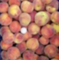 Fruit background peaches_edited.jpg