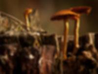 Champignons sauvages