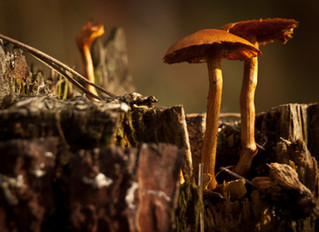 The Magic of Medicinal Mushrooms
