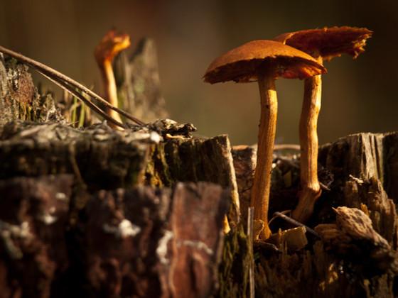 #TuesdayTips: Eat Mushrooms.