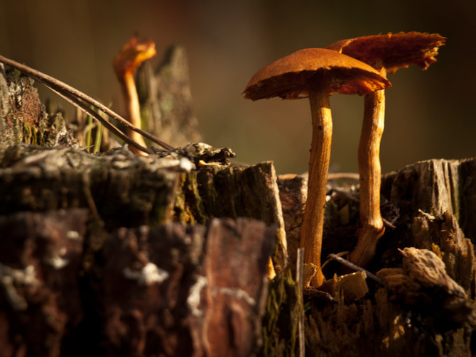 Wild Mushrooms Make You Happy (and I don't mean the magic kind)