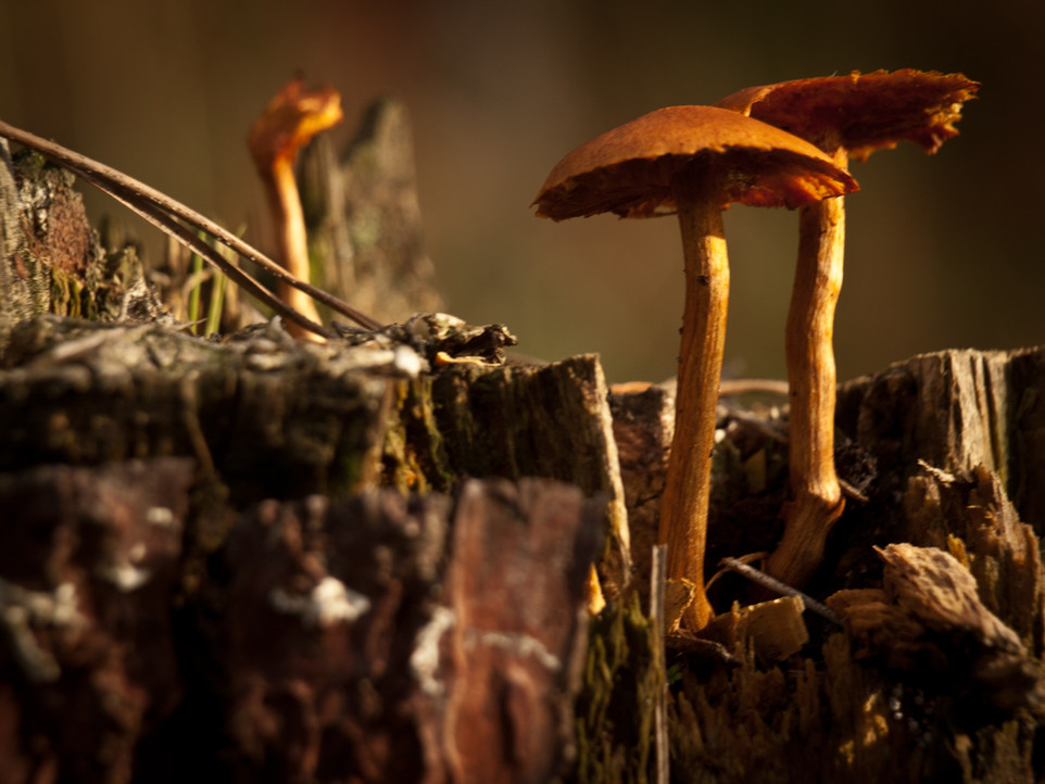 Medicinal Mushrooms and Other Tales of Fungi
