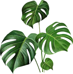 monstera background.png