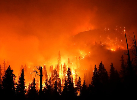 Wildfires, Plastic Conspiracy, and What I'm Doing about It.