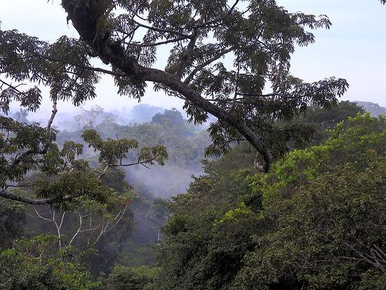 Ecuador_edited.jpg