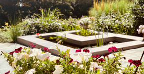 Creating a garden: the beauty, the benefits, and the birth of the next generation
