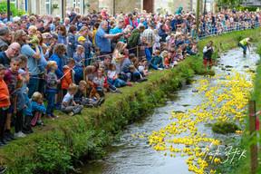 Waddington Duck Race
