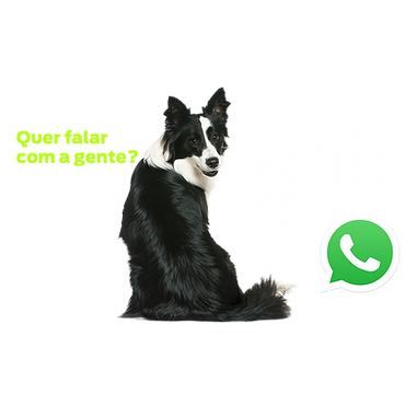 whats-app.png
