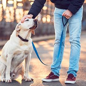 como-ensinar-o-cachorro-a-passear.jpg