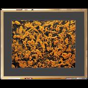 21 Fforbes 150 Gold Frame Black Aperture.png