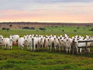 Produção de Bovinos à Pasto