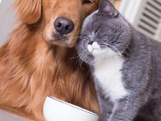 Lucre com novas oportunidades do mercado Pet