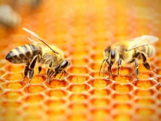 Benefícios de investir na criação de abelhas