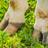 Saiba como prevenir Doenças de Casco em Bovinos
