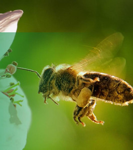 A importância da criação de abelhas
