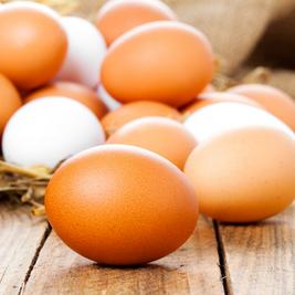 Saiba como evitar doenças e patógenos em sua produção de ovos