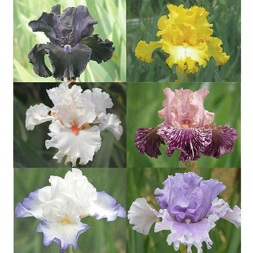 新花・高級花のセット