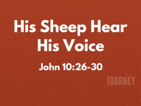 His Sheep Hear His Voice