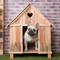 french-bulldog-inside-wooden-dog-house-R
