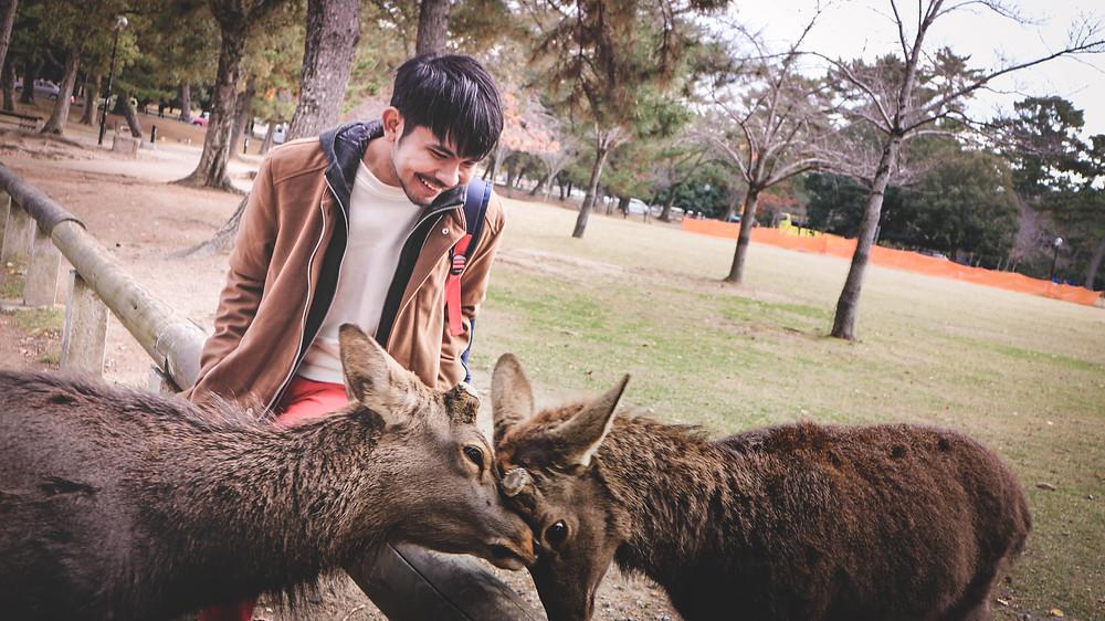 คิดถึง นารา ที่น่ารัก (Nara Park Japan)
