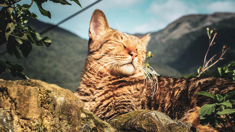 หมู่บ้านหูต่ง ดงแมวเหมียว Houtong Cat Village Taiwan หมู่บ้านแมวไต้หวัน