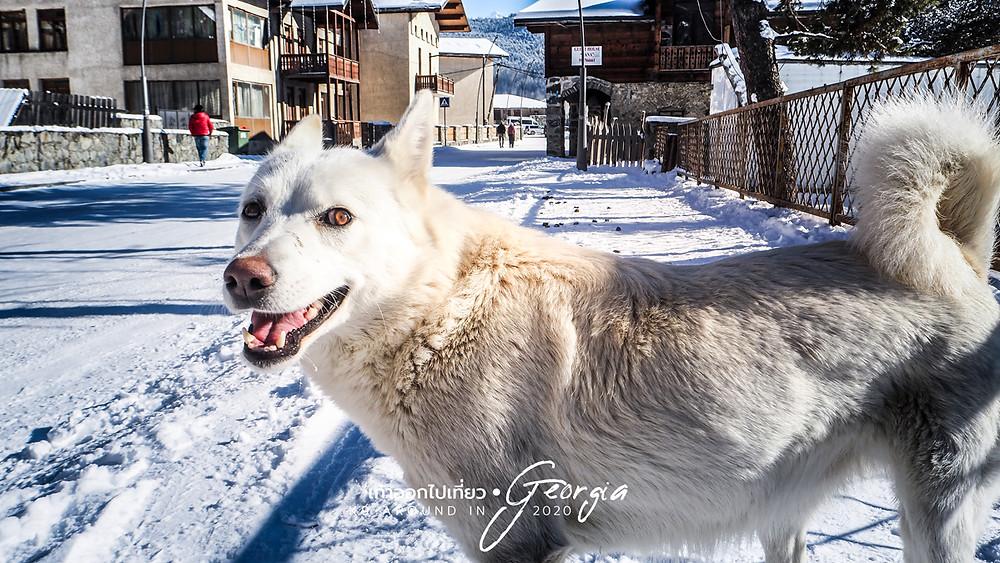 เพื่อนสี่ขา มะหมาจอร์เจีย (Dogs & My Journey in Georgia)