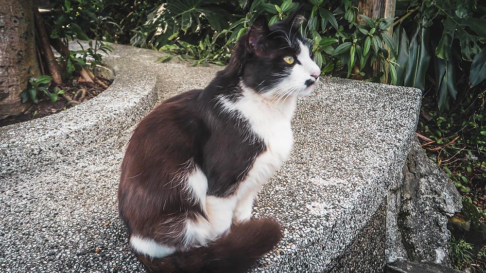 หมู่บ้านหูต่ง ดงแมวเหมียว Houtong Cat Village Taiwan