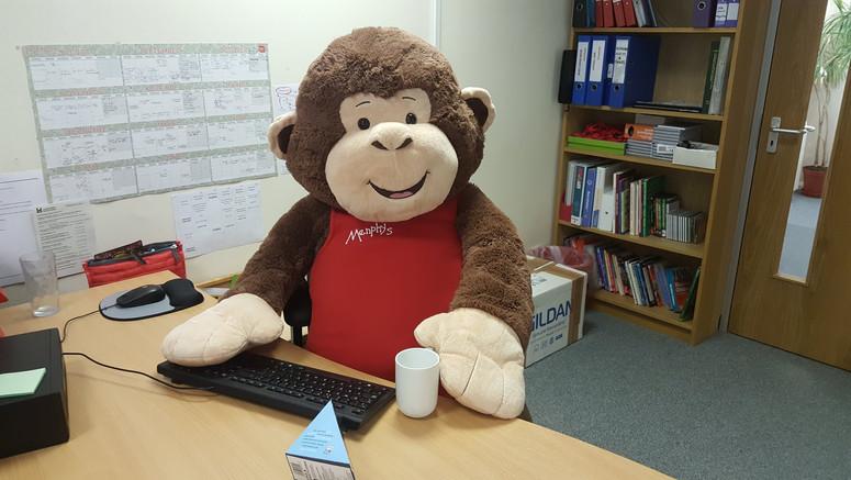 Molly the Menphys Monkey