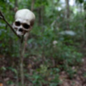Jungle Danger_edited.jpg